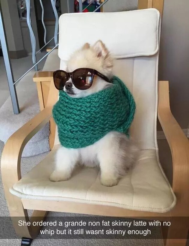 Dog in scarf and sunglasses