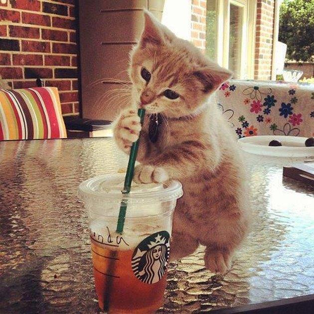 Cute kitten with an ice tea