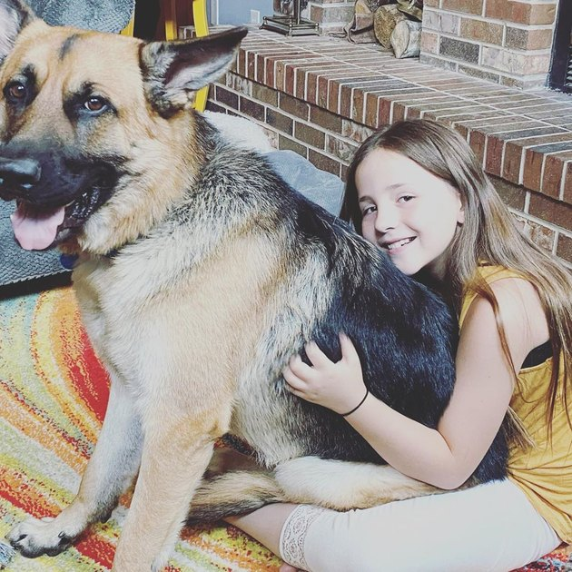 german shepherd sits on girl