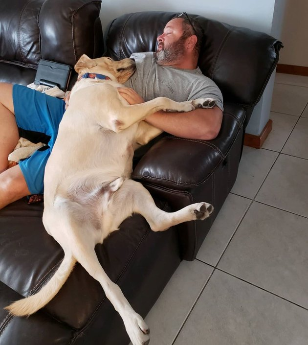 big dog sleeps on man's chest