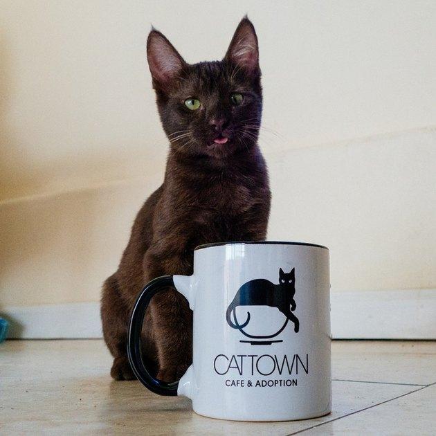 Black cat with coffee mug