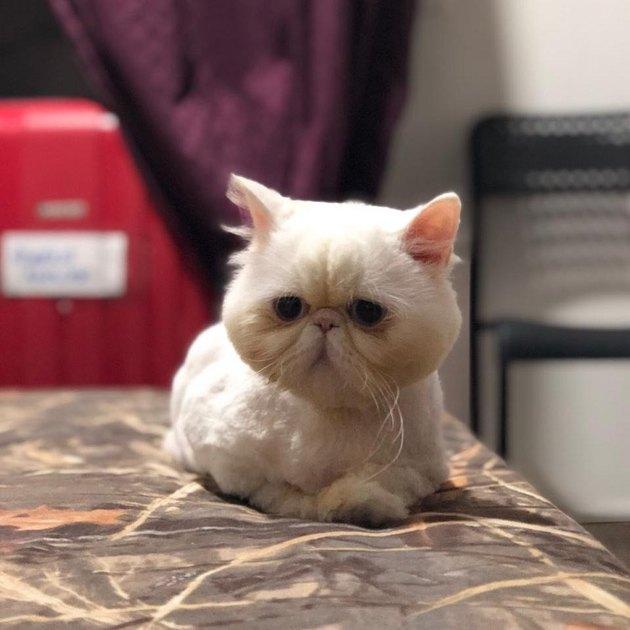 cat named Junjun