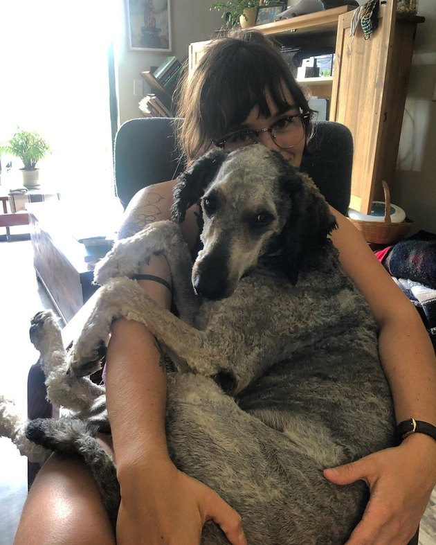 big dog sits on woman's lap