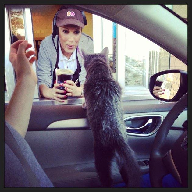 Cat at a coffee drive thru