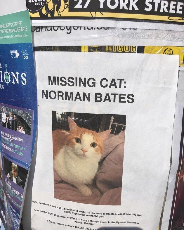 cat named Norman Bates