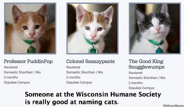 shelter has funny names for adoptable cats