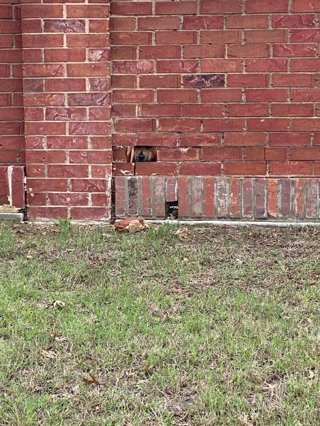 Dog looking through hole in brick wall