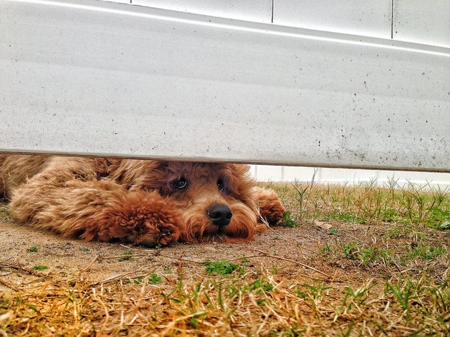Dog looking under fence.