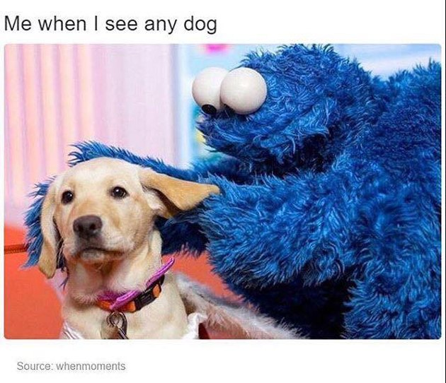 Cookie Monster and a dog