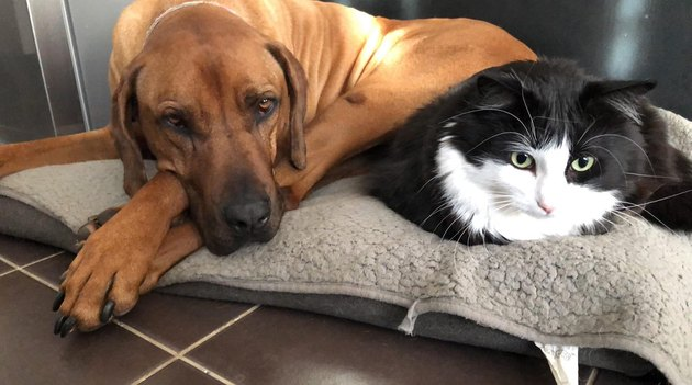 "Pet owners are sharing portraits of their cat & dog ""fur siblings"" and it is too pure"