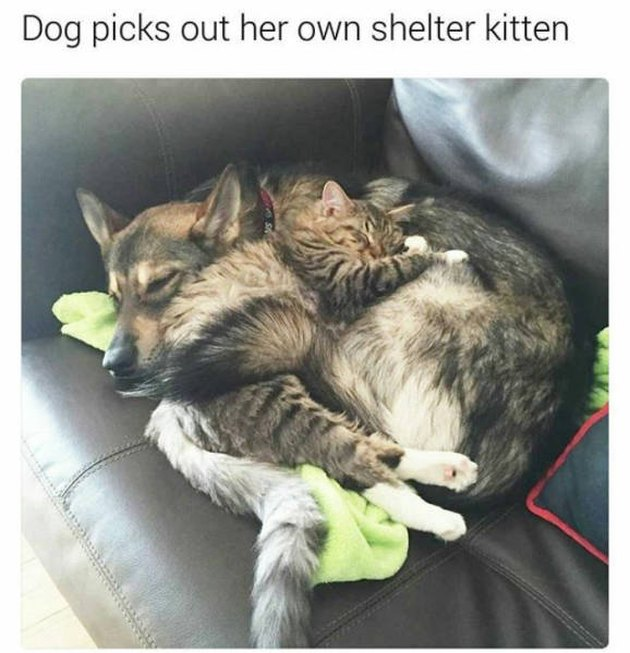 Dog picked out a kitten from the shelter and they love each other.