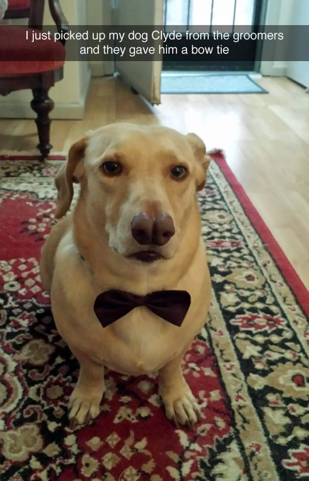 Cute dog with a bow tie.