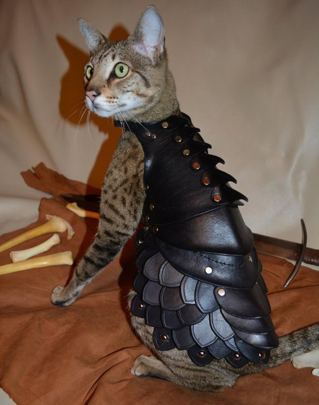 Cat in leather armor