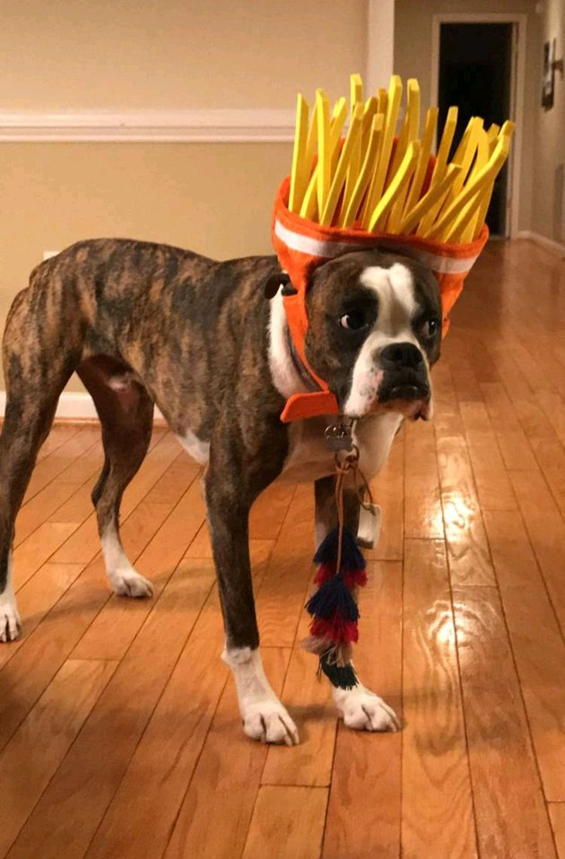 Dog wearing a french fry costume