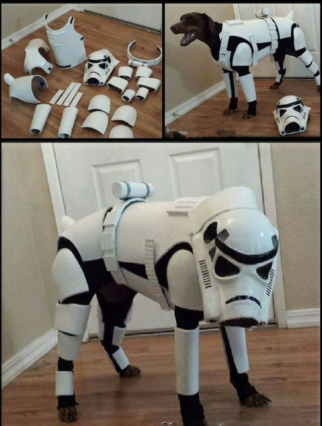 Dog dressed as a Storm Trooper
