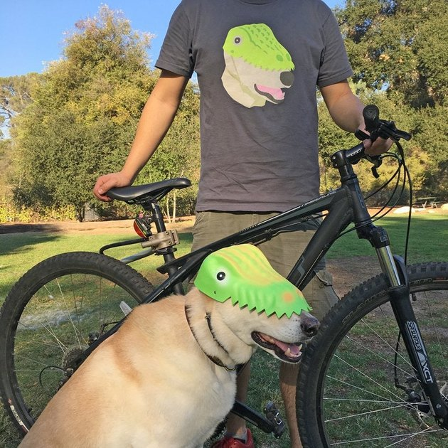 Dog wearing a dinosaur hat