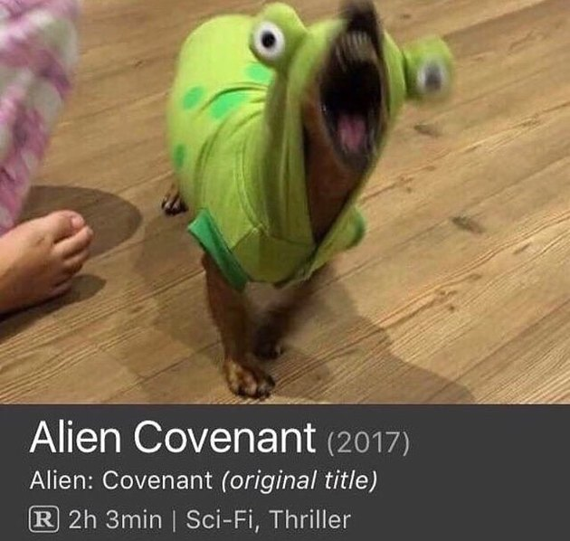 A dog, in an alien costume