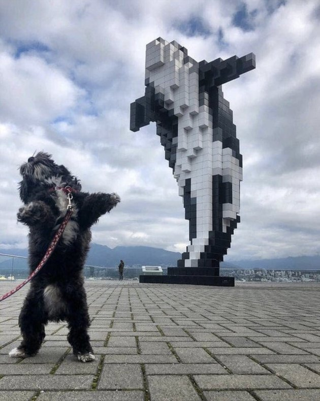 Dog leaping in air in front of leaping orca statue
