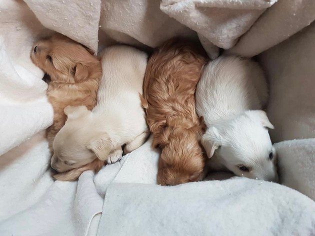 Canadian cops spend hours digging up puppies trapped in tunnel