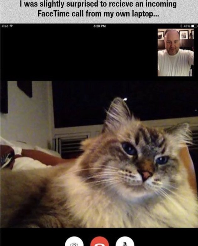 A cat FaceTiming his person