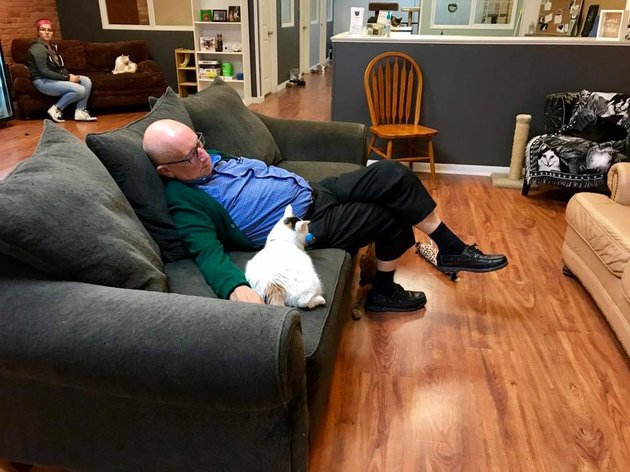 Wisconsin retiree naps with all the cats at no-kill shelter