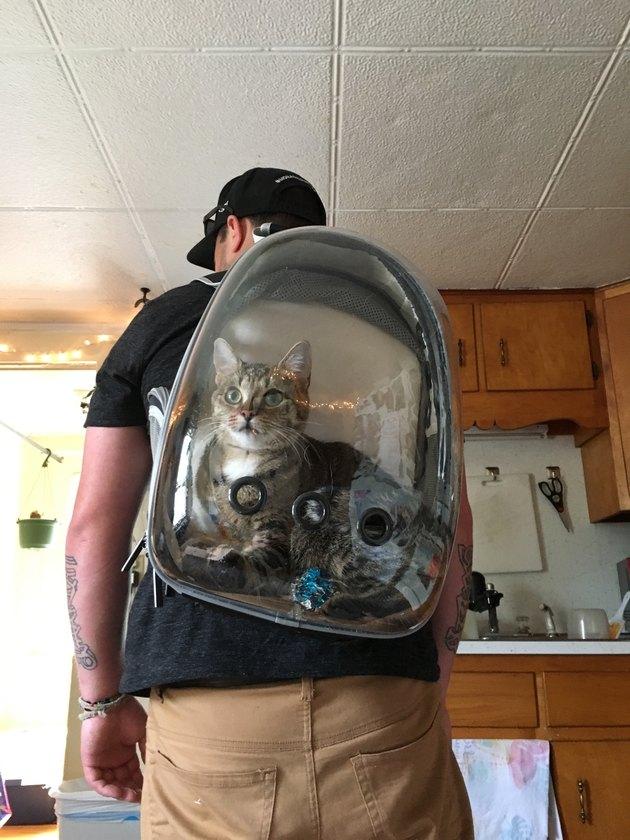 Cat in a catbackpack