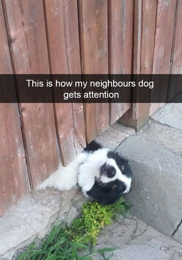 Dog sticking his head out from underneath a fence