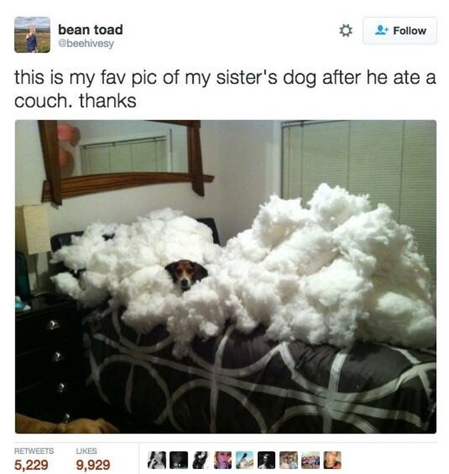 Dog ate a whole couch and is sitting in its remains