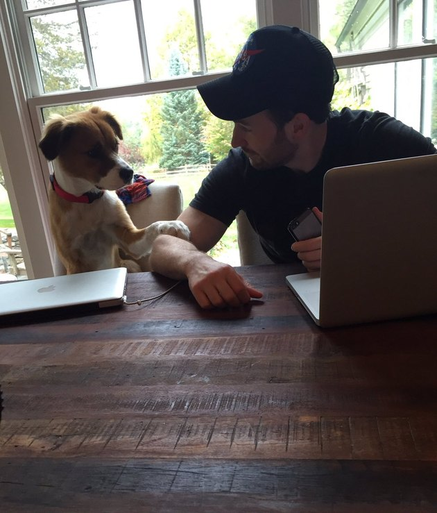 "A definitive ranking of all the times ""Avengers"" star Chris Evans was the internet's favorite dog dad"
