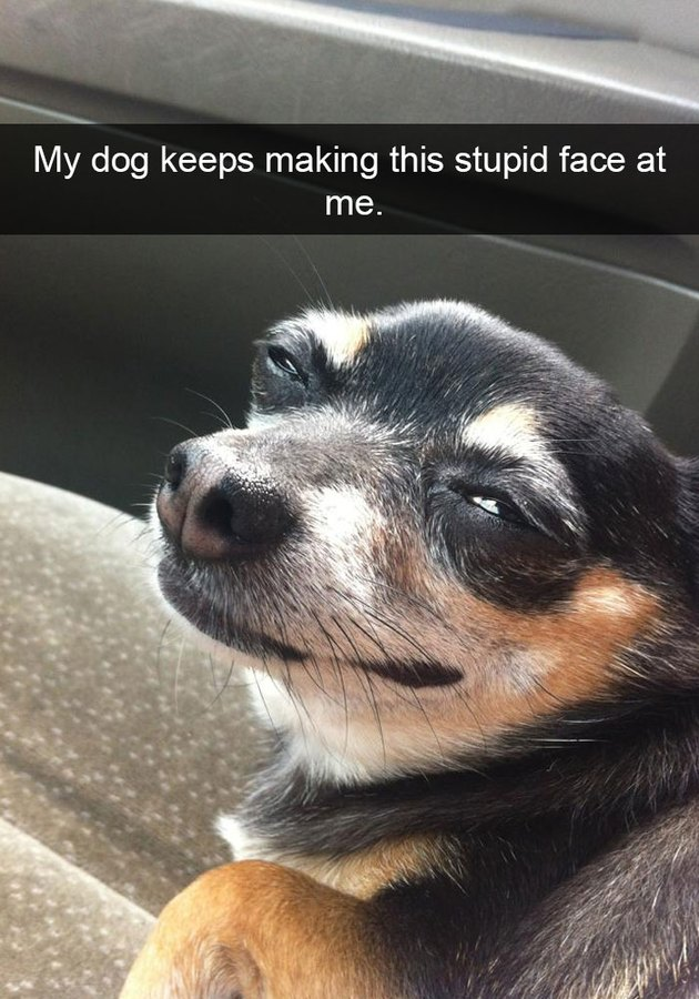 Dog with a cute and sneaky look on her face!