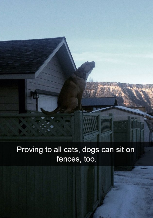 Dog sitting on a fence like he's some kind of cat