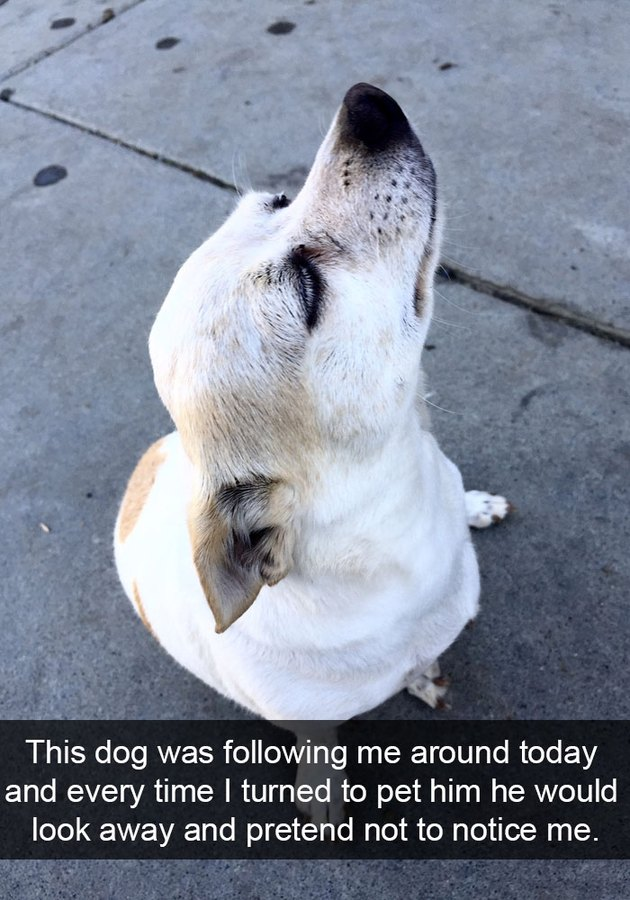 A dog who followed this person around and then ignored the person.