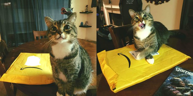 cat sits on Amazon delivery
