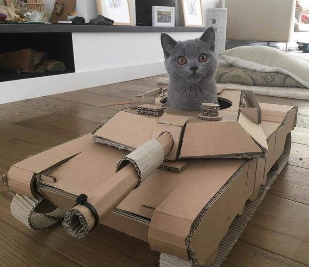 gray cat in cardboard, cat-sized tank