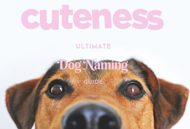 cuteness ultimate dog naming guide
