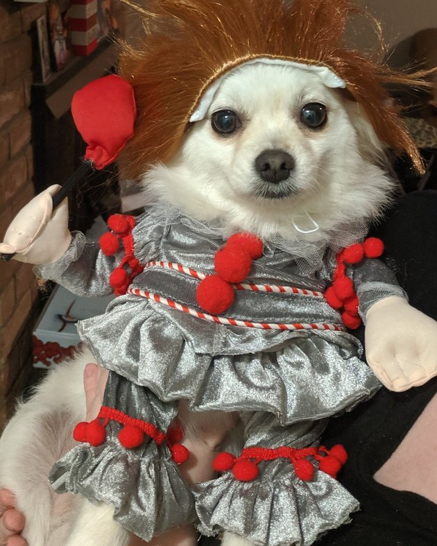 Dog in Pennywise costume