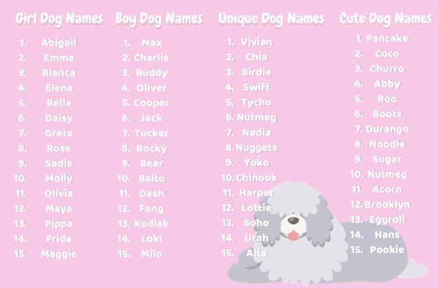 best dog names infographic