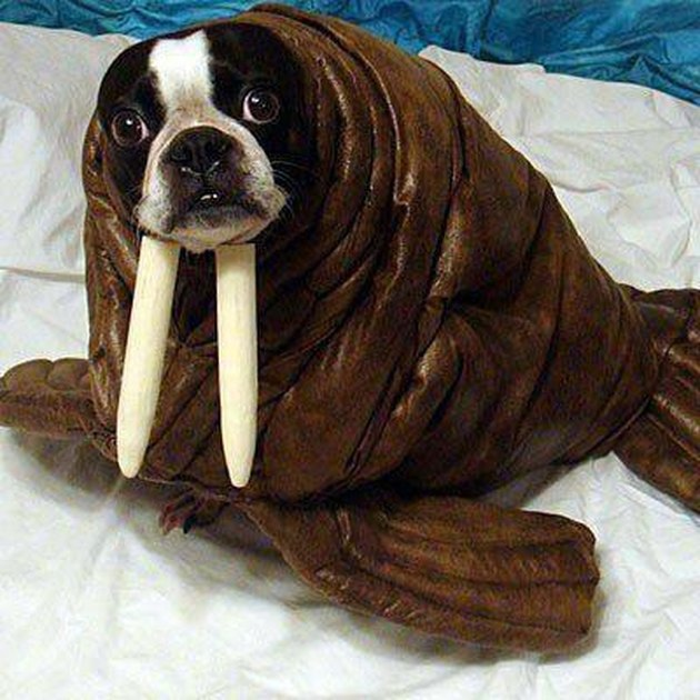 Animals Dressed As Other Animals For Halloween