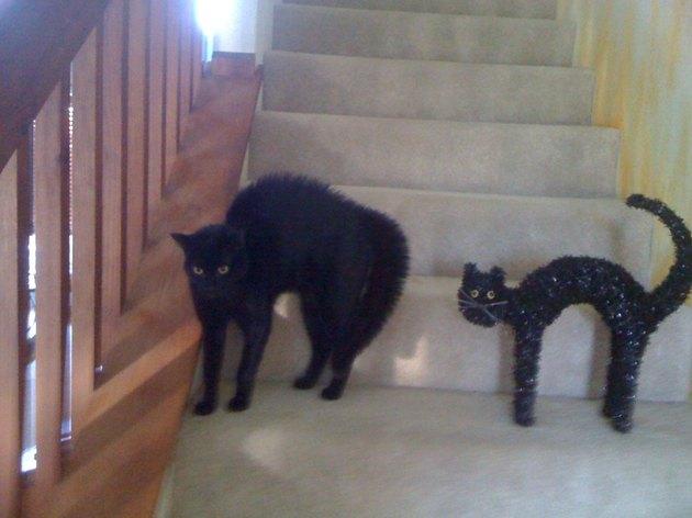 Black cat and black cat Halloween decoration