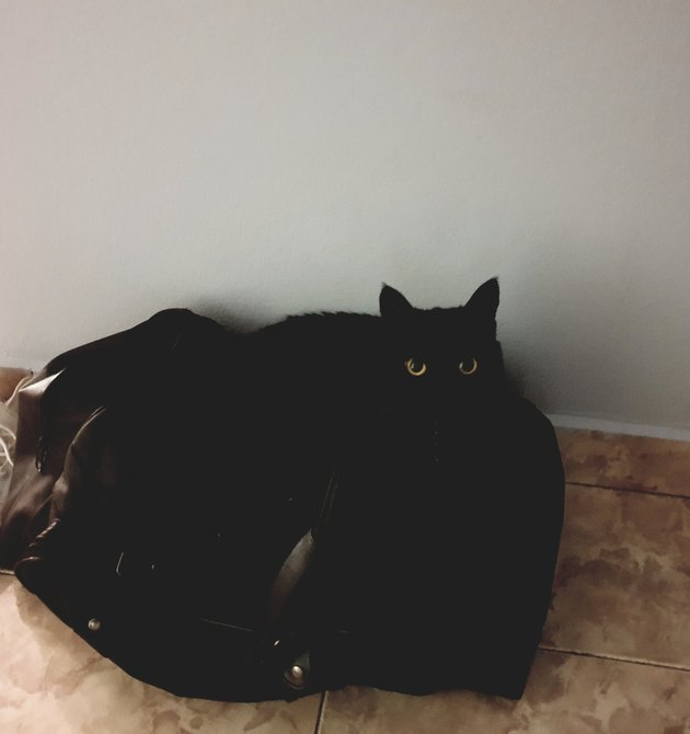 black cat melts into black bean bag