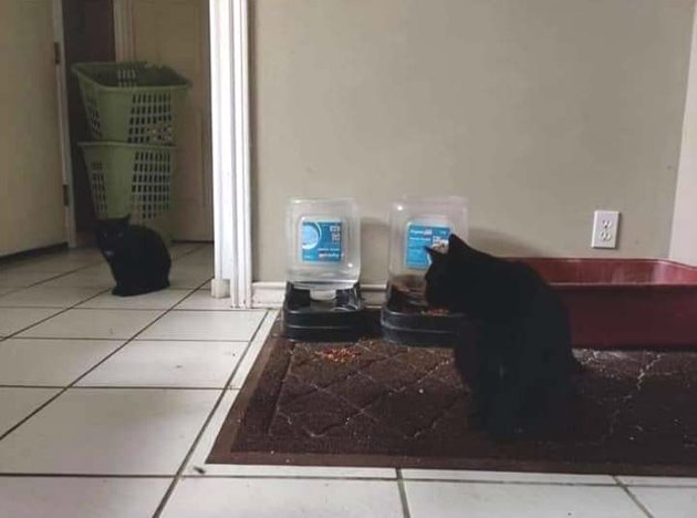 husband doesn't realize family has two black cats