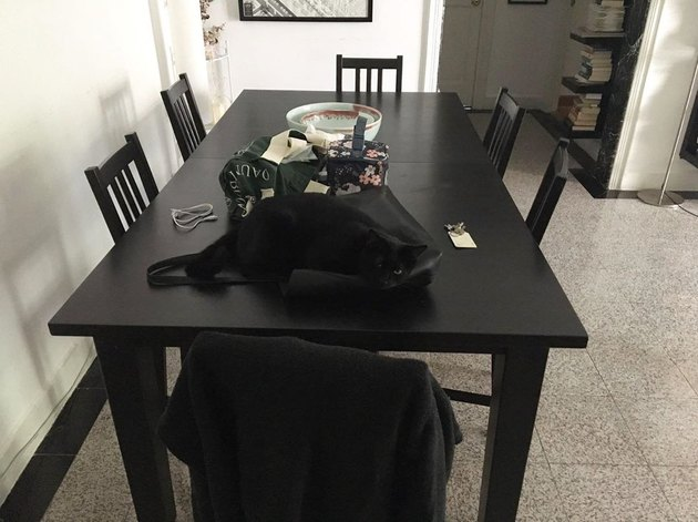 black cat sleeps on black bag on black table