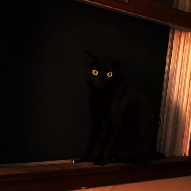 black cat sitting in open window impossible to see