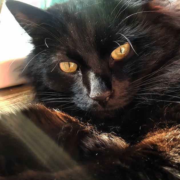 sunlight prompts woman to get camera to photograph elusive black cat