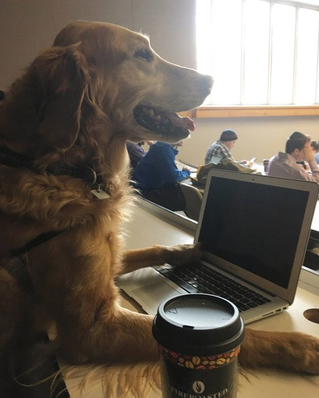 Dog in lecture hall.