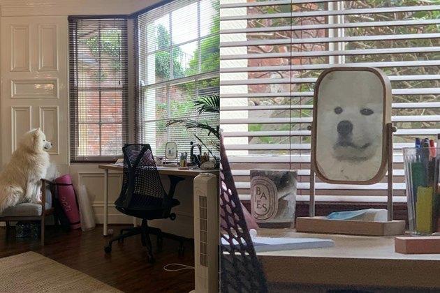 dog looks longingly at mirror