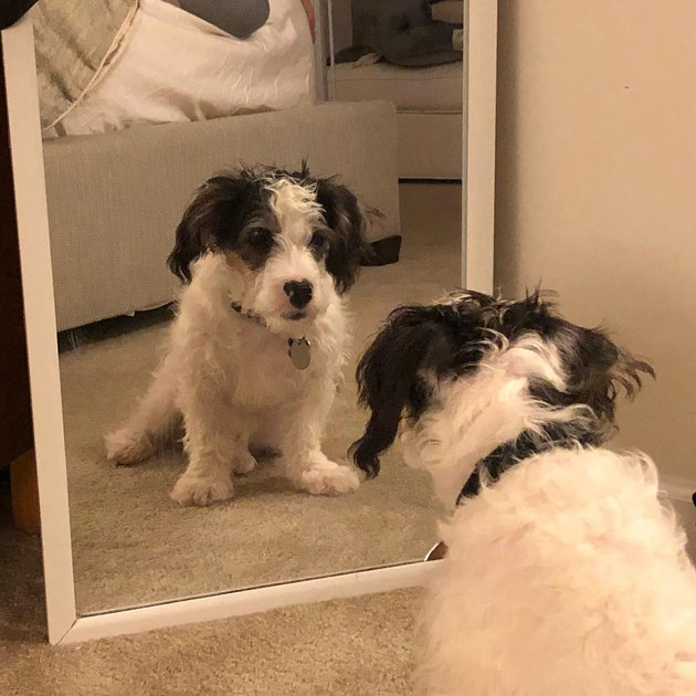 dog pumps himself up with pep talk