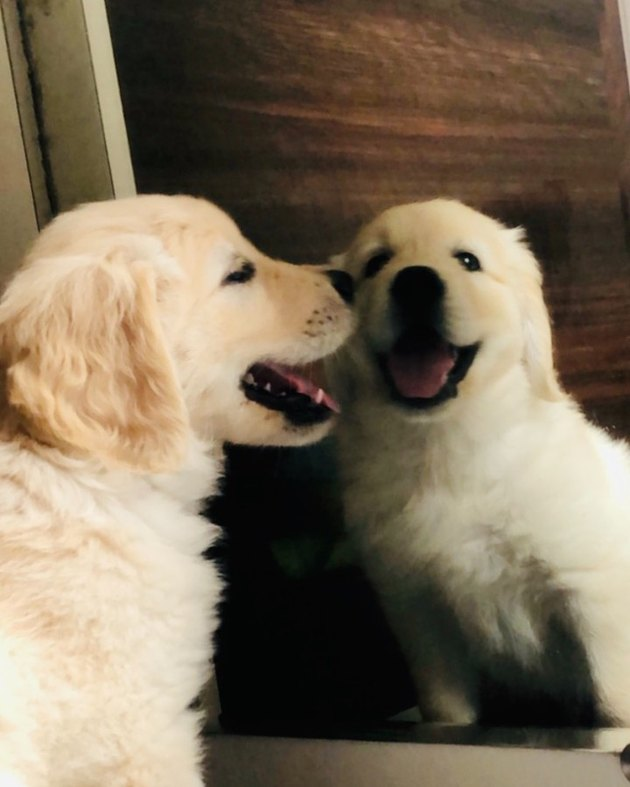dog stares at reflection in mirror
