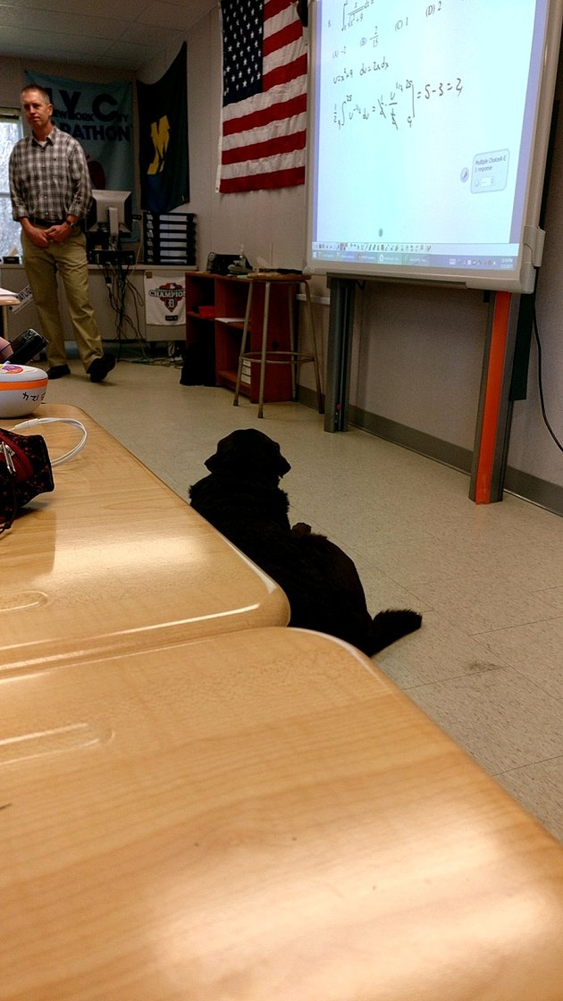 Dog sitting in front of class room.