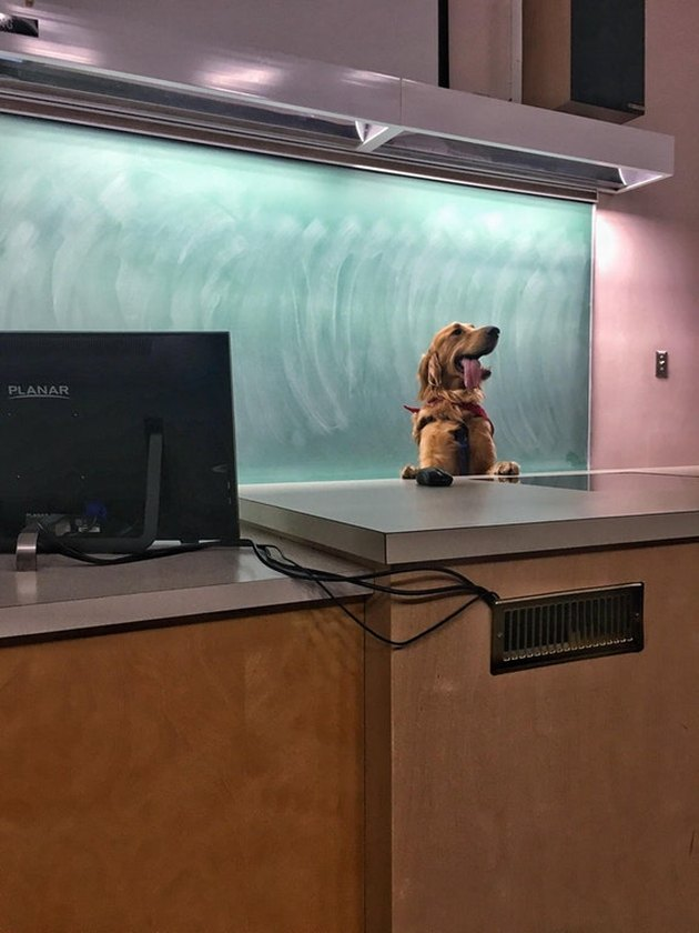 Dog standing at front of classroom.